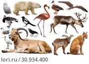 Купить «animal birds europe isolated», фото № 30934400, снято 23 июля 2019 г. (c) Яков Филимонов / Фотобанк Лори