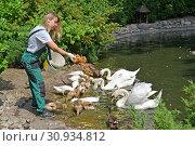 Купить «Работница зоопарка кормит водоплавающих птиц. Калининград», фото № 30934812, снято 13 июня 2019 г. (c) Ирина Борсученко / Фотобанк Лори
