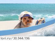 Купить «A dog in a captain's cap sits in a boat against the sea. Collage», фото № 30944196, снято 13 июня 2019 г. (c) Элина Гаревская / Фотобанк Лори