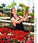 Купить «Young female gardener working with dipladenia plants in pots», фото № 30951212, снято 22 июля 2019 г. (c) Яков Филимонов / Фотобанк Лори