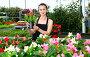 Купить «Young woman florist holding dipladenia plants in pots indoors», фото № 30951220, снято 18 июня 2019 г. (c) Яков Филимонов / Фотобанк Лори