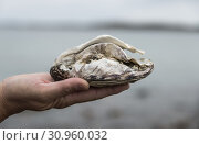 Купить «Female hand with found oyster in norway», фото № 30960032, снято 3 августа 2017 г. (c) easy Fotostock / Фотобанк Лори