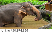 Купить «Feeding elephants in National park», видеоролик № 30974856, снято 8 июня 2019 г. (c) Игорь Жоров / Фотобанк Лори