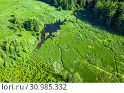 Купить «Swampy landscape», фото № 30985332, снято 18 июня 2019 г. (c) Икан Леонид / Фотобанк Лори