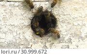 Купить «Горная пасека. Леток в улье. Ускорено в 3 раза. Mountain apiary. Notches in the hive. Accelerated by 3 times.», видеоролик № 30999672, снято 22 июня 2019 г. (c) Евгений Романов / Фотобанк Лори