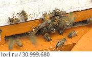 Купить «Горная пасека. Леток в улье. Mountain apiary. Notches in the hive.», видеоролик № 30999680, снято 22 июня 2019 г. (c) Евгений Романов / Фотобанк Лори