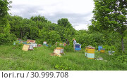 Купить «Горная пасека. Пчеловоды за работой. Mountain apiary. Beekeepers at work.», видеоролик № 30999708, снято 22 июня 2019 г. (c) Евгений Романов / Фотобанк Лори
