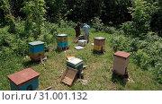 Купить «Горная пасека. Пчеловоды за работой. Вид с воздуха. Mountain apiary. Beekeepers at work. Aerial view.», фото № 31001132, снято 11 июля 2020 г. (c) Евгений Романов / Фотобанк Лори