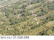 Купить «Landscape view of Darang Tea Garden, Himachal Pradesh, North-East India. Here follows 7 step process of tea-making involves rolling, withering, fermenting, drying, sieving, grading, fiber extraction», фото № 31028088, снято 30 декабря 2018 г. (c) easy Fotostock / Фотобанк Лори