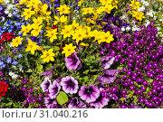Купить «Фон из разноцветных красивых декоративных цветов», фото № 31040216, снято 22 июня 2019 г. (c) Наталья Волкова / Фотобанк Лори