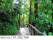 Купить «Misty Rainforest in Costa Rica, Central America», фото № 31102184, снято 17 декабря 2017 г. (c) easy Fotostock / Фотобанк Лори