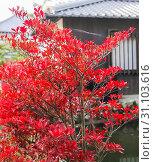 Купить «Foliage surrounding the grounds at Kiyomizu-dera Temple, Kyoto in autumn», фото № 31103616, снято 12 ноября 2010 г. (c) easy Fotostock / Фотобанк Лори