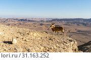 Купить «View of ramon crater desert of southern israel during hiking», фото № 31163252, снято 16 декабря 2017 г. (c) easy Fotostock / Фотобанк Лори