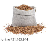 Купить «Buckwheat in bag isolated on white background with clipping path. Closeup», фото № 31163944, снято 6 ноября 2017 г. (c) easy Fotostock / Фотобанк Лори