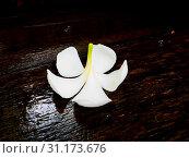 Купить «White plumeria flower fall wet wooden board», фото № 31173676, снято 19 апреля 2016 г. (c) easy Fotostock / Фотобанк Лори
