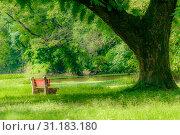 Купить «Red color bench in the autumn park. Single wooden park bench in a lush green botanical garden on tree background. ( Kolkata, India )», фото № 31183180, снято 12 августа 2018 г. (c) easy Fotostock / Фотобанк Лори