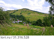 Купить «Neat roofs of rural houses in a valley among green trees and harvested hay on a hillside divided into plots.», фото № 31316528, снято 30 июня 2014 г. (c) easy Fotostock / Фотобанк Лори