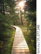 Купить «Wooden walkway path in a beautiful green fir forest in the autumn.», фото № 31377348, снято 19 октября 2019 г. (c) easy Fotostock / Фотобанк Лори