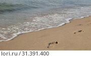 Купить «Wave of the sea surf washes away footprints on a sandy beach», видеоролик № 31391400, снято 26 июня 2019 г. (c) Юлия Бабкина / Фотобанк Лори