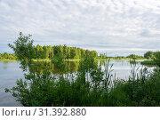 Купить «A small lake with an overgrown swampy shore on a summer day», фото № 31392880, снято 12 июня 2019 г. (c) Валерий Смирнов / Фотобанк Лори