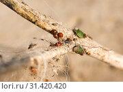Купить «Close-up of matted dry grass and leaves», фото № 31420420, снято 11 мая 2019 г. (c) Pavel Biryukov / Фотобанк Лори