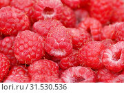 Фон из спелых ягод малины. Стоковое фото, фотограф Dmitry29 / Фотобанк Лори