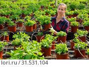 Купить «Female owner of glasshouse growing melissa», фото № 31531104, снято 16 июля 2019 г. (c) Яков Филимонов / Фотобанк Лори