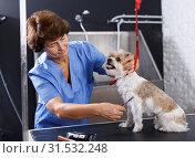 Купить «Female groomer performing hair care for puppy», фото № 31532248, снято 27 августа 2018 г. (c) Яков Филимонов / Фотобанк Лори