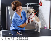 Купить «Female groomer with havanese puppy», фото № 31532252, снято 27 августа 2018 г. (c) Яков Филимонов / Фотобанк Лори