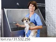 Купить «Woman washing havanese at grooming salon», фото № 31532256, снято 27 августа 2018 г. (c) Яков Филимонов / Фотобанк Лори