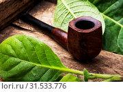 Купить «Stylish smoking pipe and not a mature tobacco leaf», фото № 31533776, снято 2 июля 2018 г. (c) easy Fotostock / Фотобанк Лори