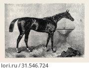 MR. R. SUTTON'S LORD LYON, WINNER OF THE TWO THOUSAND GUINEA STAKES AT NEWMARKET, UK, 1866 (2013 год). Редакционное фото, фотограф Artokoloro / age Fotostock / Фотобанк Лори