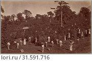 Coffee Harvesting, Las Nubes-Guatemala, 1875, Albumen silver print from glass negative, Image: 5 3/8 × 9 1/8 in. (13.7 × 23.2 cm), Photographs, Eadweard... (2017 год). Редакционное фото, фотограф © Copyright Artokoloro Quint Lox Limited / age Fotostock / Фотобанк Лори