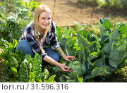 Woman harvesting cabbage at farm. Стоковое фото, фотограф Яков Филимонов / Фотобанк Лори