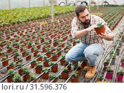 Купить «Man gardener working with tomatoes seedling in pots in greenhouse», фото № 31596376, снято 9 апреля 2019 г. (c) Яков Филимонов / Фотобанк Лори