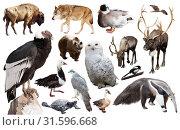 Set of fauna of North American animals. Стоковое фото, фотограф Яков Филимонов / Фотобанк Лори