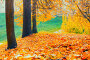 Купить «Осенний пейзаж. Autumn landscape - golden colorful park trees and fallen autumn leaves on the ground in city park in cloudy autumn day. Picturesque autumn scene», фото № 31647856, снято 18 октября 2018 г. (c) Зезелина Марина / Фотобанк Лори