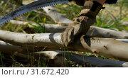 Купить «Lumberjack cutting wooden log with pruning saw 4k», видеоролик № 31672420, снято 13 августа 2018 г. (c) Wavebreak Media / Фотобанк Лори