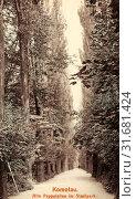 Avenues in the Czech Republic, Gardens and parks in Chomutov, Populus in the Czech Republic, History of Chomutov, 1912, Ústí nad Labem Region, Komotau, Alte Pappelallee im Stadtpark (2019 год). Редакционное фото, фотограф Copyright Liszt Collection / age Fotostock / Фотобанк Лори