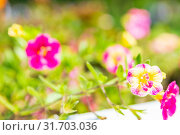Купить «Blurred background of beautiful wildflowers in summer sunny day.», фото № 31703036, снято 1 июня 2019 г. (c) Акиньшин Владимир / Фотобанк Лори