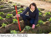 Купить «Woman hoeing in garden», фото № 31703232, снято 23 июля 2019 г. (c) Яков Филимонов / Фотобанк Лори