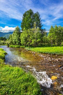 Горная река Туэкта, летом, в окружении гор и леса. Онгудайский район, Республика Алтай, Южная Сибирь, Россия