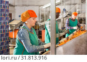 Купить «Female employee sorting mandarins on producing grading line», фото № 31813916, снято 15 декабря 2018 г. (c) Яков Филимонов / Фотобанк Лори