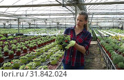 Купить «Portrait of successful smiling woman farmer working in greenhouse, engaged in cultivation of potted portulaca», видеоролик № 31842024, снято 3 июня 2019 г. (c) Яков Филимонов / Фотобанк Лори