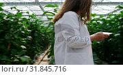 Купить «Scientist with digital tablet examining plants in the greenhouse 4k», видеоролик № 31845716, снято 21 августа 2018 г. (c) Wavebreak Media / Фотобанк Лори
