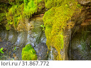 "Купить «Ecology and nature. The source of clean drinking spring water among stone rocks and moist fresh green moss. Spring ""Wailing Wall"" in the Saratov region village Gremyachka», фото № 31867772, снято 6 июля 2019 г. (c) Светлана Евграфова / Фотобанк Лори"