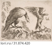 Купить «Plate 2: eagle and eaglet, from 'Various animals' (Diversi animali), ca. 1641, Etching, second state of three (De Vesme), Plate: 3 3/8 × 4 7/16 in. (8...», фото № 31874420, снято 26 апреля 2017 г. (c) age Fotostock / Фотобанк Лори