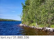 Green lake shore with trees growing close to water, sunny summer day. Стоковое фото, фотограф Кекяляйнен Андрей / Фотобанк Лори