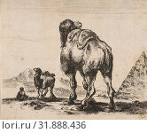 Купить «Plate 18: camel viewed from behind with pyramid at right, from 'Various animals' (Diversi animali), after 1641, Etching, reverse copy, Sheet: 3 3/8 ×...», фото № 31888436, снято 26 апреля 2017 г. (c) age Fotostock / Фотобанк Лори