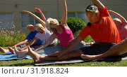 Купить «Front view of Caucasian male trainer training senior people in performing exercise at the garden of », видеоролик № 31918824, снято 22 ноября 2018 г. (c) Wavebreak Media / Фотобанк Лори